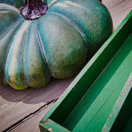 gourd photography